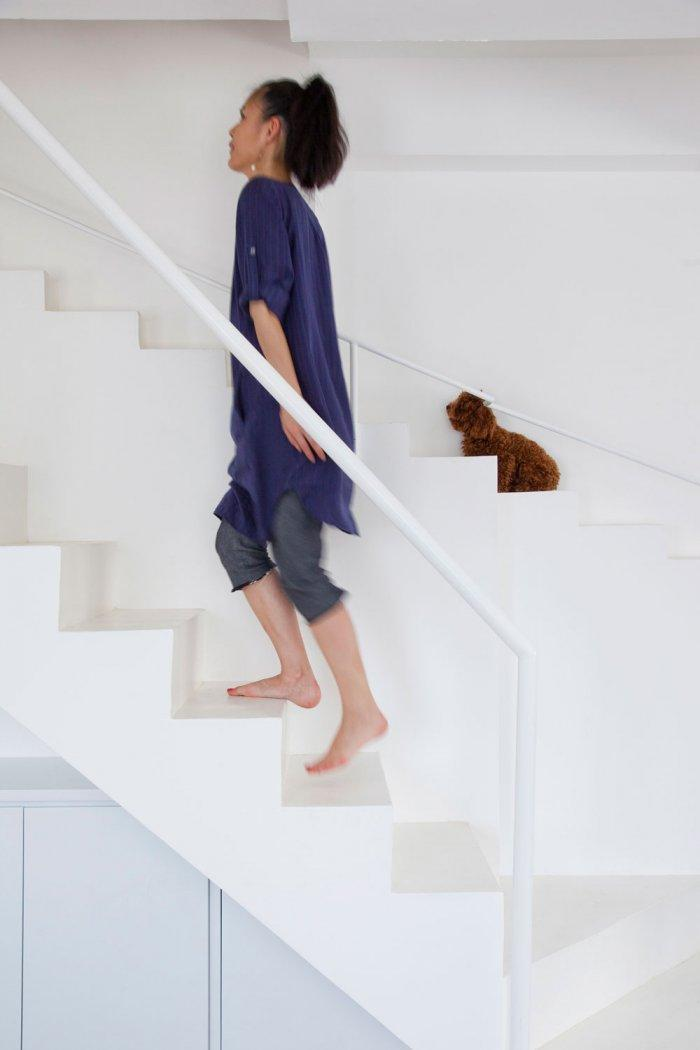 Stair For Pets   Creative Dog Staircase For Pets In A House In Vietnam
