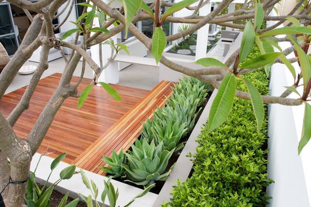 Aloe Vera Decoration - Garden Design Ideas - How to Use Shrubs for Hedge
