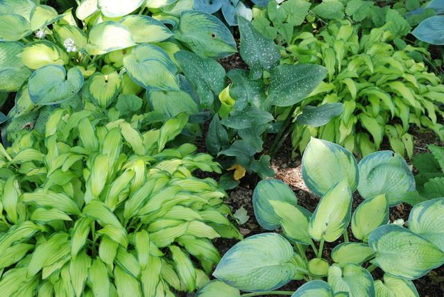 Decorative Plants- Garden Decor Ideas - Unique and Fresh Examples