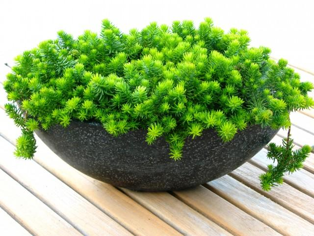 Decorative Vase - Garden Decor Ideas - Unique and Fresh Examples
