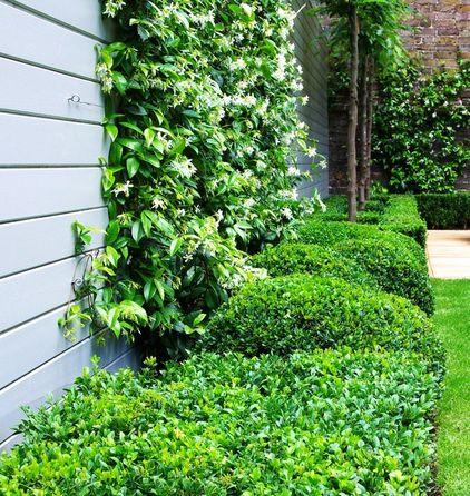 Garden design ideas how to use shrubs for hedge founterior for Evergreen climbing plants for privacy