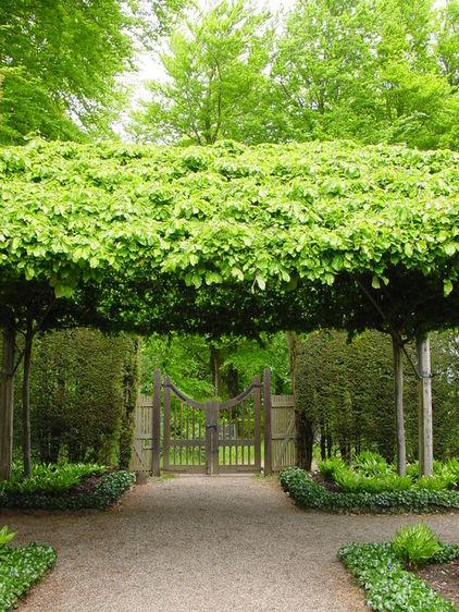 Garden Design With Shrubs : Plants garden design ideas how to use shrubs for hedge