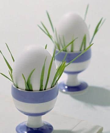 Green Grass in Eggcups - Easter Decorating Ideas in Pictures & How-To Examples