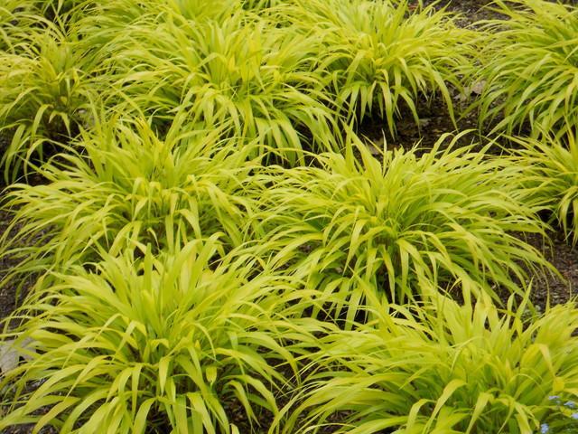 Green Plants - Garden Decor Ideas - Unique and Fresh Examples