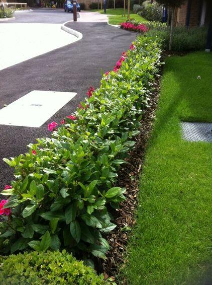 Plants - Garden Design Ideas - How to Use Shrubs for Hedge