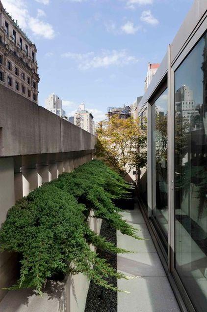Shrub Plants - Garden Design Ideas - How to Use Shrubs for Hedge