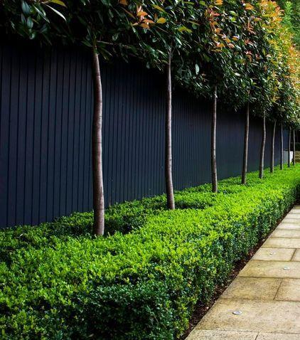 Garden Design Ideas - How to Use Shrubs for Hedge