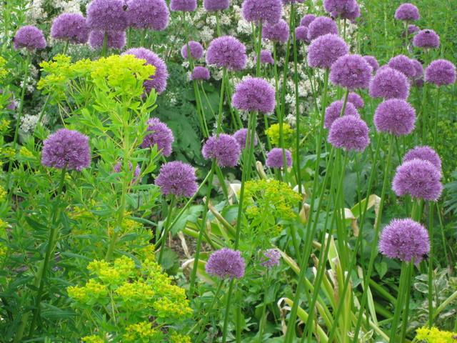 Violet Flowers 01 - Garden Decor Ideas - Unique and Fresh Examples