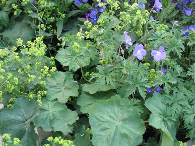Violet Flowers - Garden Decor Ideas - Unique and Fresh Examples
