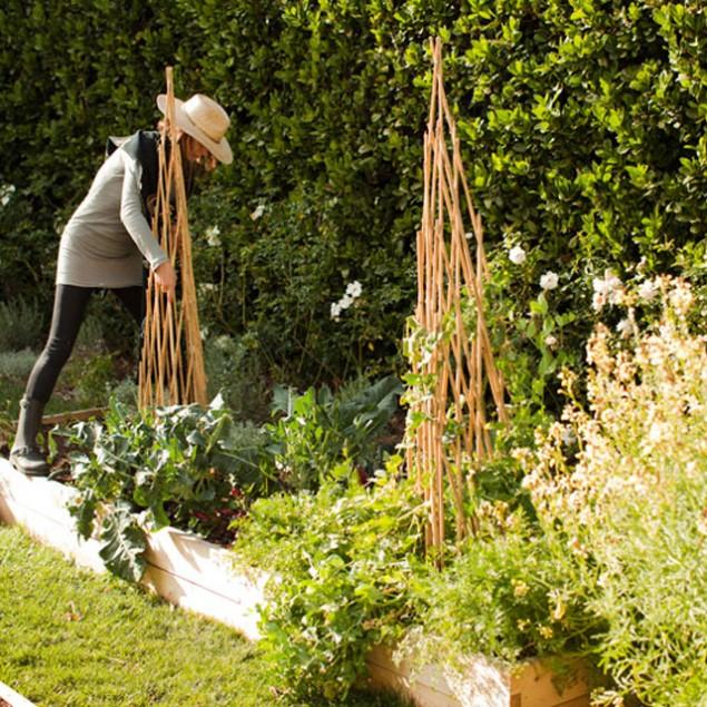 How to Design an Edible Garden - What Plants to Choose