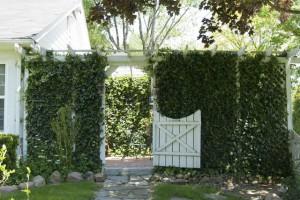 Garden Guide to Secret Garden Gate with Climbing Plants
