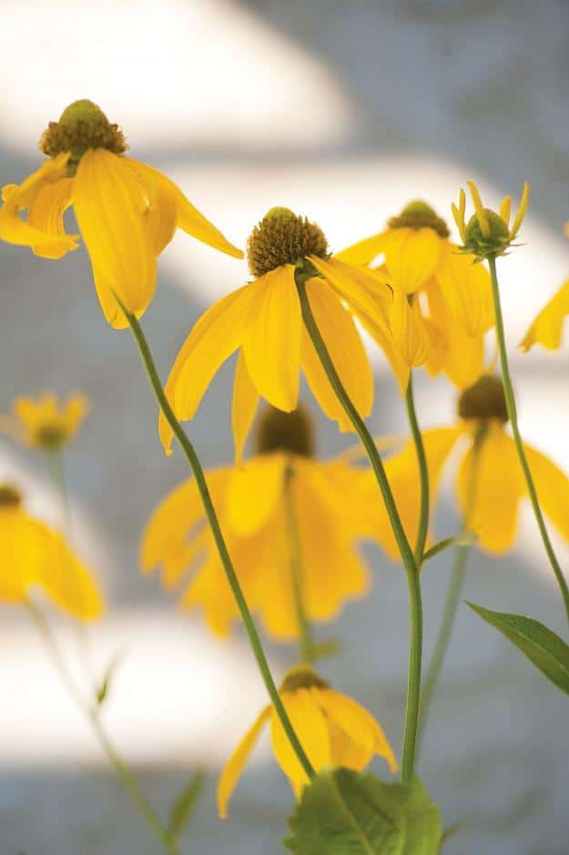 Beautiful yellow flowers - Sustainable House with Beautiful Outdoor Garden Areas