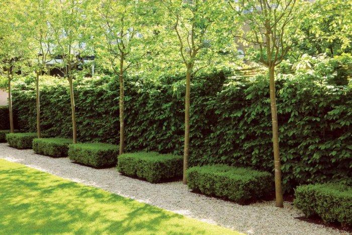with an excellent result: Decorative Garden Hedge Fence Ideas, Tips ...