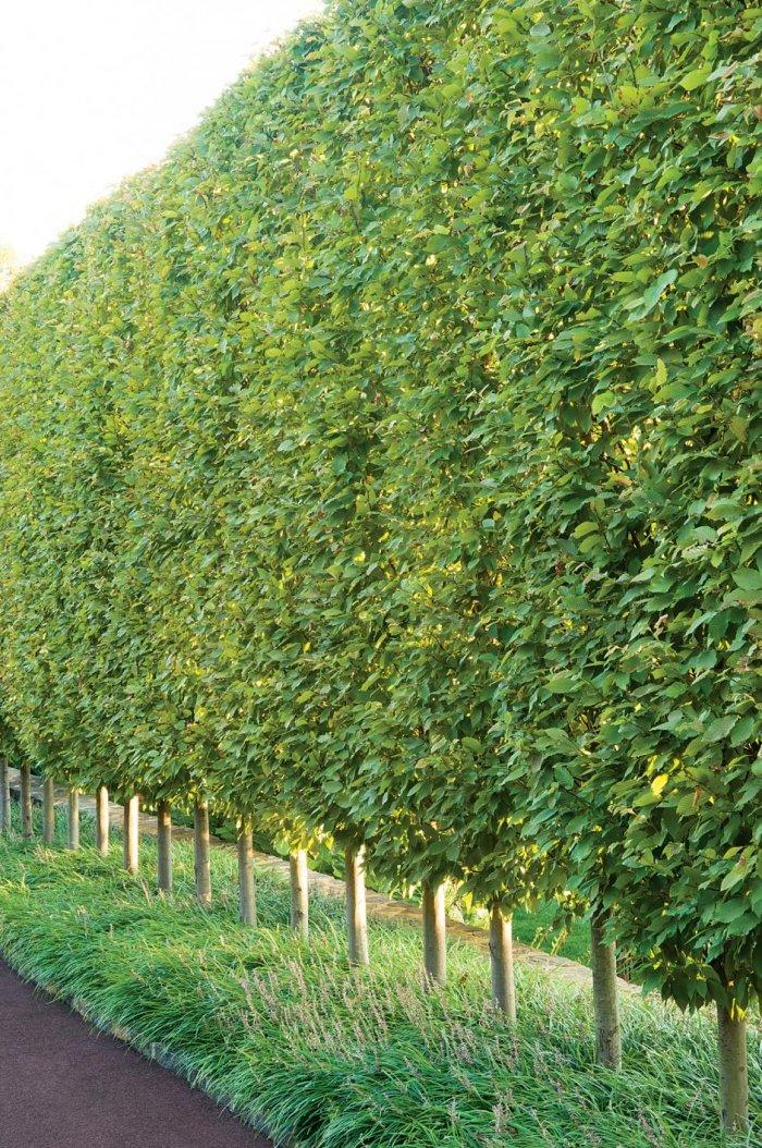 how to cut a hedge level