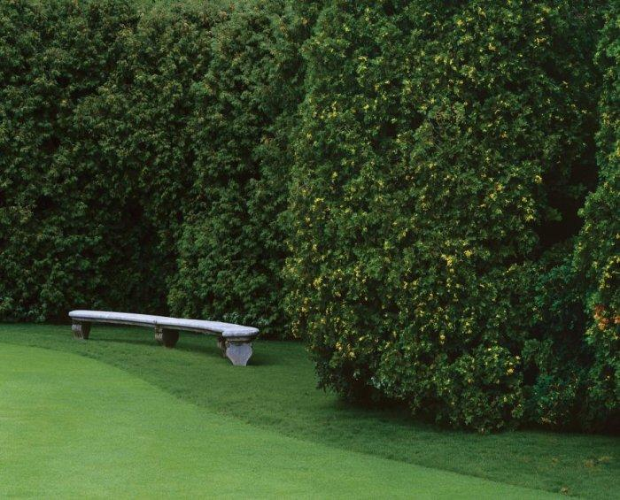 Decorative Hedge Fence Ideas, Tips and Examples