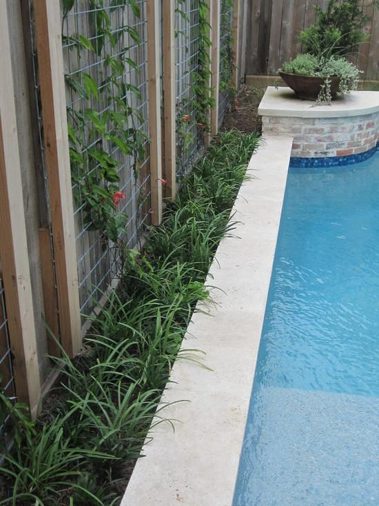 Hedge of podocarpus - How to Place a Garden Swimming Pool in a Small Yard