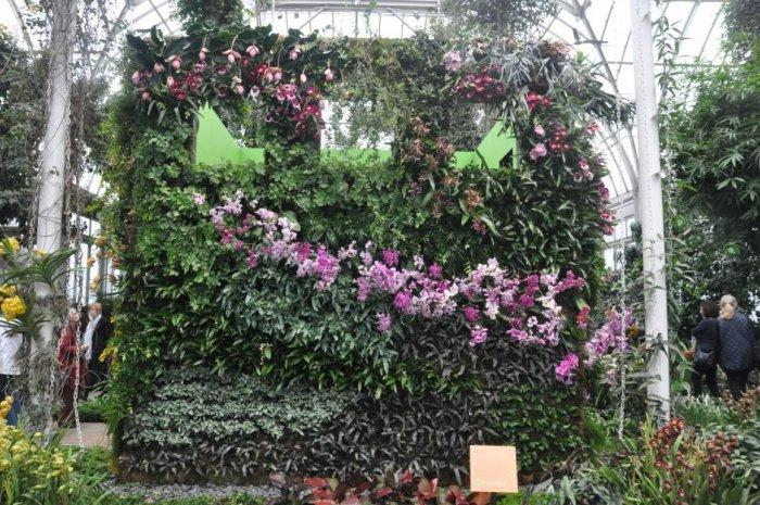 Hedge wall made of creeping plants - Decorative Ideas, Tips and Examples