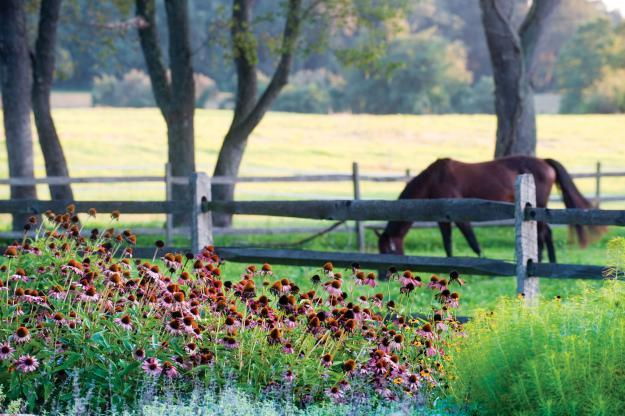 Horse grazing grass outdoors - Sustainable House with Beautiful Outdoor Garden Areas