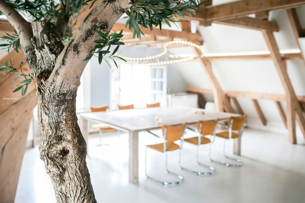 Decorative tree used in the interior of the loft - A Business Loft in Dordrecht, The Netherlands