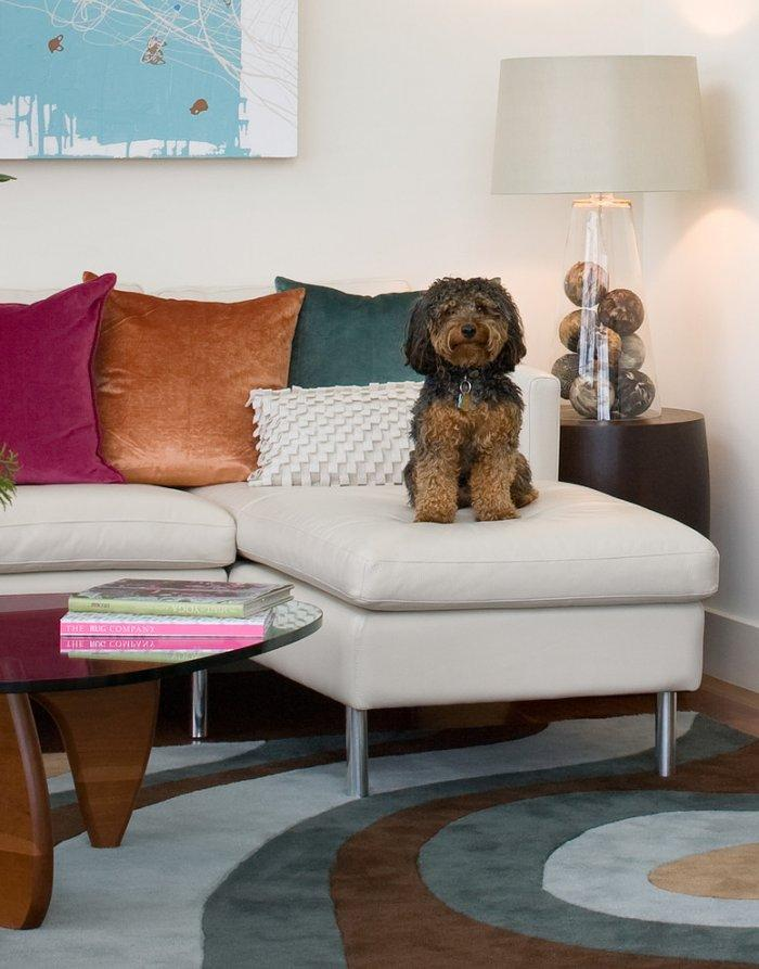 Funny dog on a contemporary sofa - How the Dogs fit in our Home Interior Design