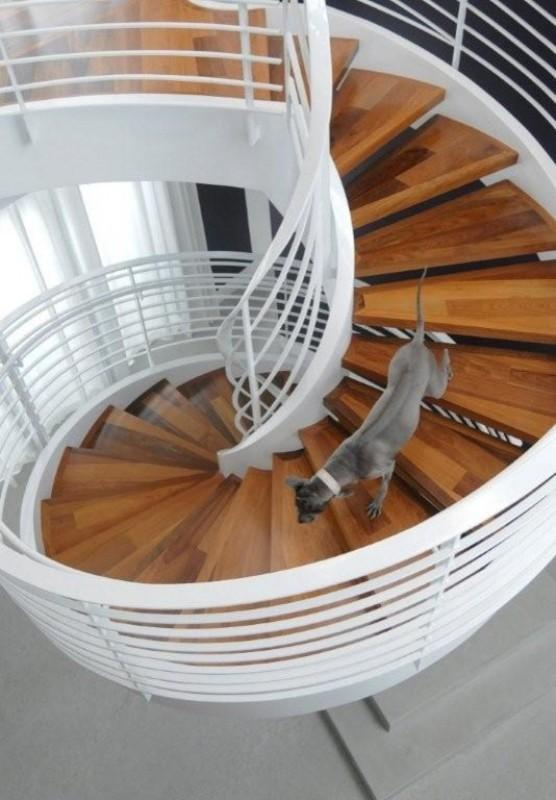 Grey dog going down on a stylish staircase - How the Dogs fit in our Home Interior Design