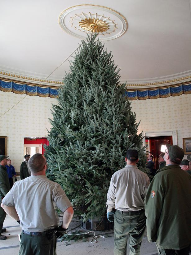 The giant Christmas tree in the Blue Room - Holiday Ideas from America's First Home