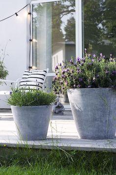 giant-concrete-bowl-of-flowers-for-decoration- Contemporary Outdoor Garden Ideas