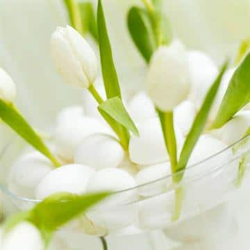 An Easter bow full of white tulips