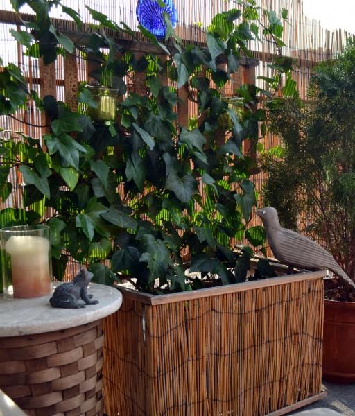 Balcony with evergreen shrubs-Splendid mini home garden