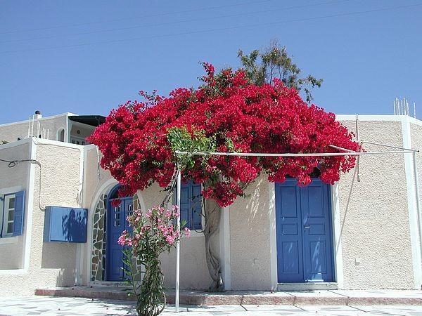 Landscape design ideas the mediterranean garden founterior for Case in stile adobe