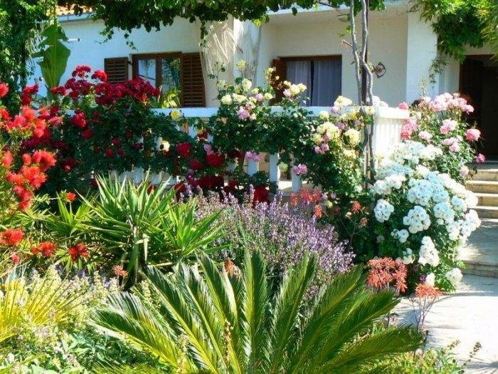 White and red Mediterranean flowers growing in a small garden in front of a white house