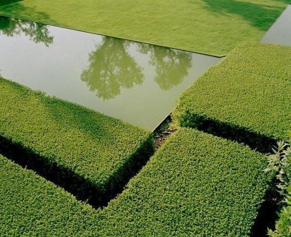 Minimalist pond with surrounding hedge