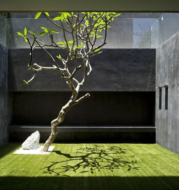 Trendy small garden with grass and tree