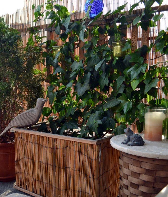 Balcony with evergreen shrubs