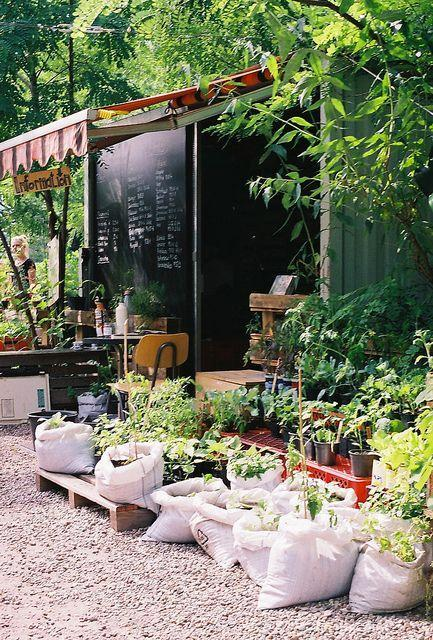 Cafe garden - with pebbles and interesting plants
