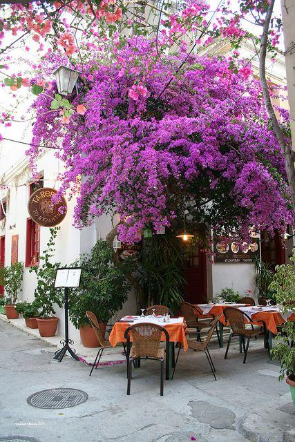 Cafe yard - with beautiful tree blossoms