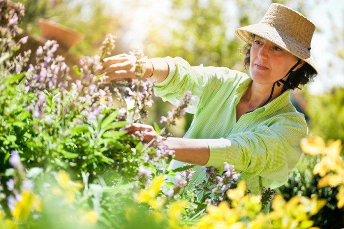 A woman maintaining her garden