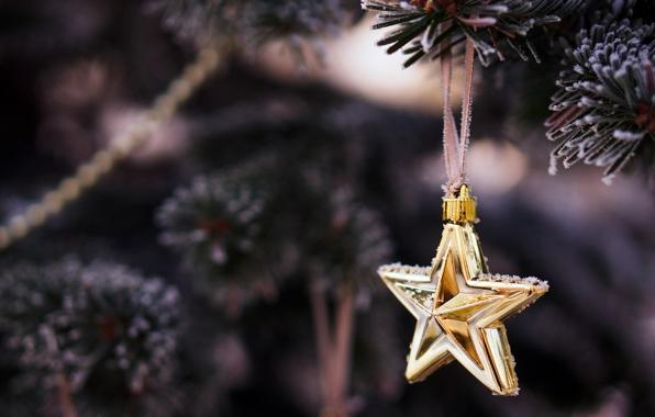 Christmas ornament - star - placed on a tree