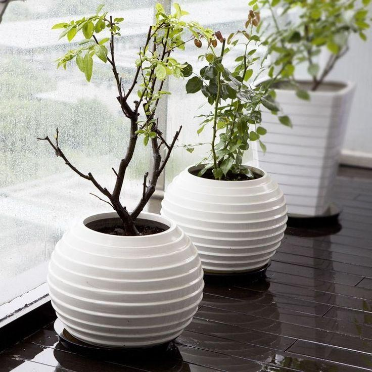 Contemporary Ideas With Decorative Flower Pots Founterior