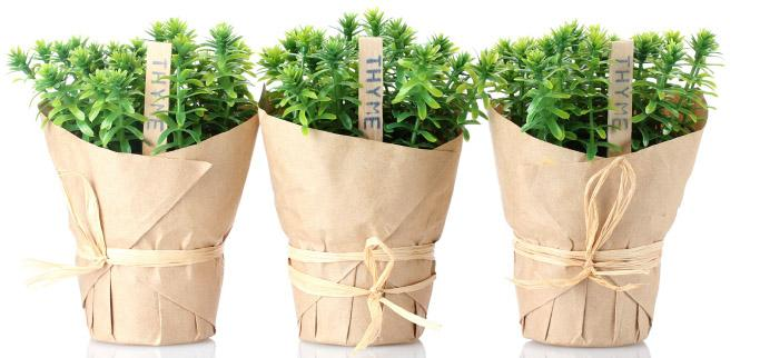 Paper flower pots - with interesting flowers