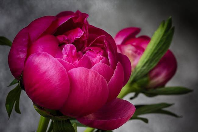 Top 5 Health Benefits of Flowers: Chemotherapy