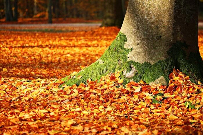 Your_Guide_to_the_Absolute_Best_Leaf_Blower_for_home_Design_and_Remodeling.jpg