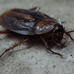 7 Effective Ways to Control Pesky House Pests