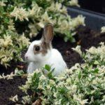 6 Ways to Critter-Proof Your Garden