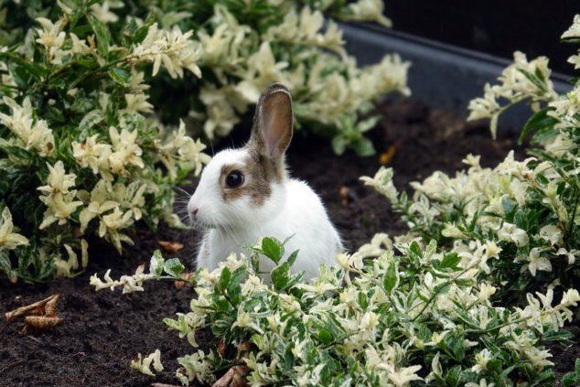 A small animal in a garden Description automatically generated