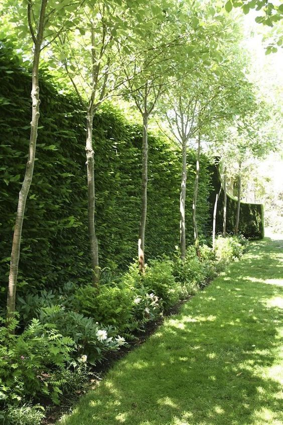 A Tall and Trimmed Hedge – Incorporating Nature Itself