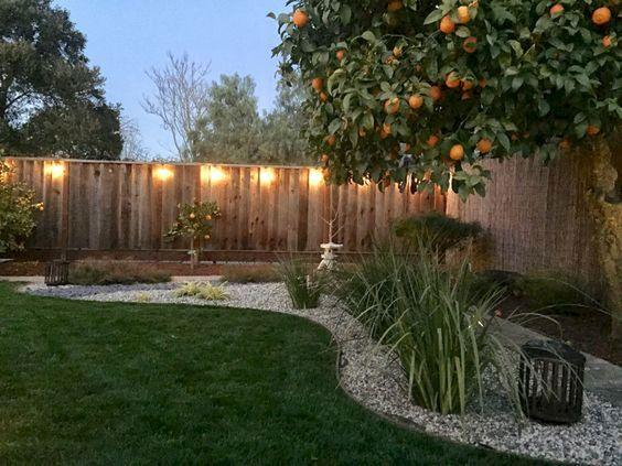 Planting Fruit Trees – Perfect for People Who Want Fresh Fruit