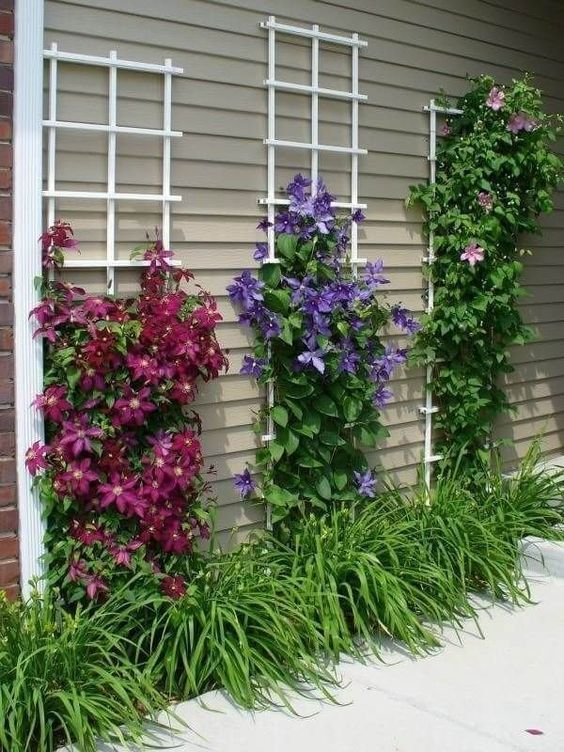 Brilliant Floral Trellises - An Abundance of Flowers