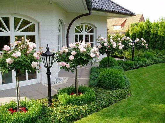 Rose Bushes - Front Yard Landscaping Ideas on a Budget