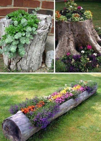 Blossoming Tree Stumps - Amazing and Earthy